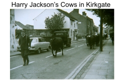Harry Jacksons cows in Kirkgate