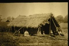 Teasle farming